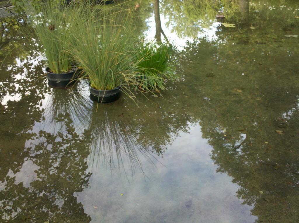 water reflecting Mila